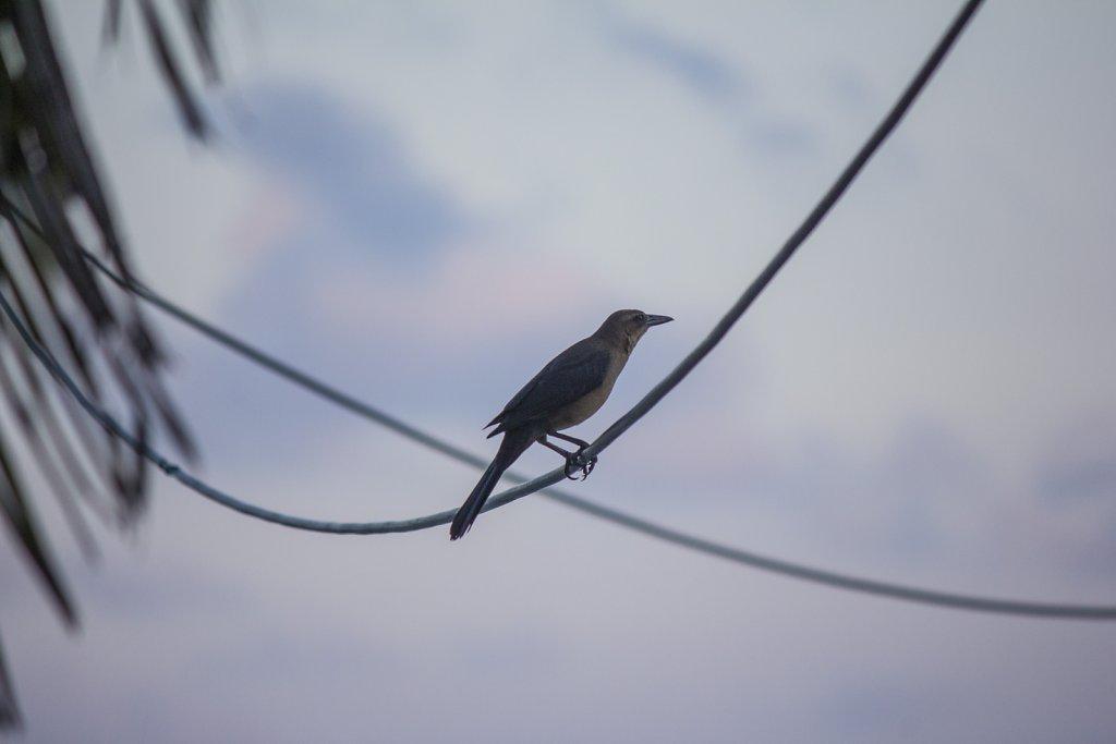 Bird on the line